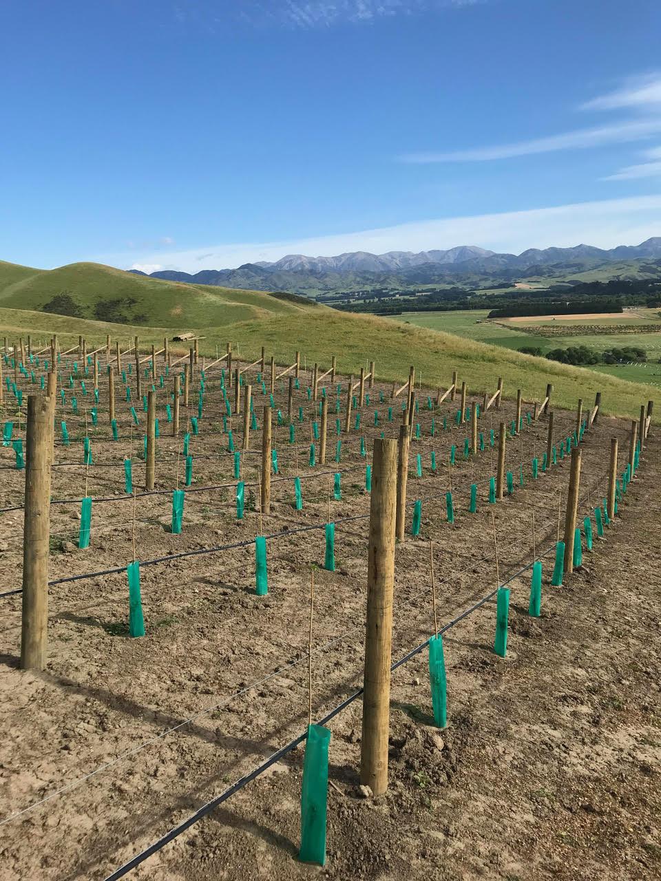 Forager Wine, vineyard
